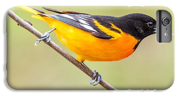 Baltimore Oriole IPhone 6s Plus Case by Paul Freidlund