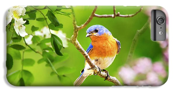 Beautiful Bluebird IPhone 6s Plus Case by Christina Rollo