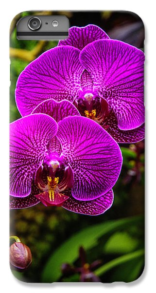 Bright Purple Orchids IPhone 6s Plus Case by Garry Gay