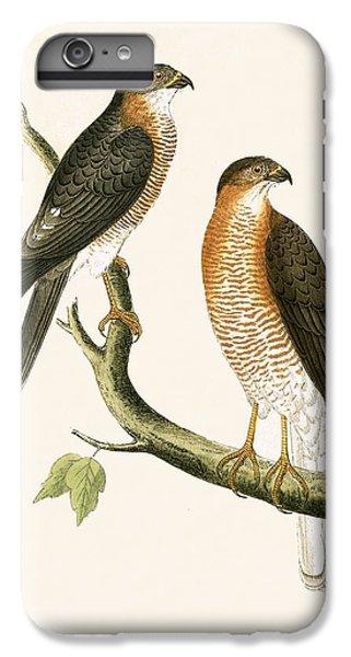 Calcutta Sparrow Hawk IPhone 6s Plus Case by English School