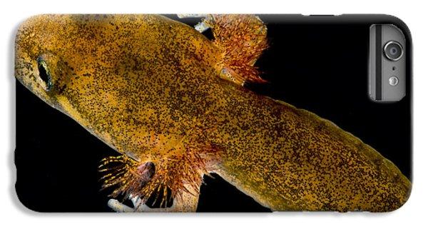 California Giant Salamander Larva IPhone 6s Plus Case by Dant� Fenolio