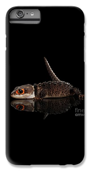 Closeup Red-eyed Crocodile Skink, Tribolonotus Gracilis, Isolated On Black Background IPhone 6s Plus Case by Sergey Taran