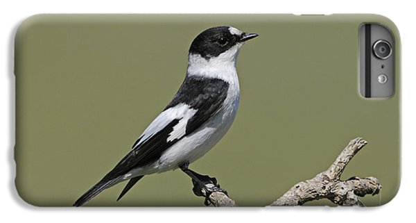 Collared Flycatcher IPhone 6s Plus Case by Richard Brooks/FLPA