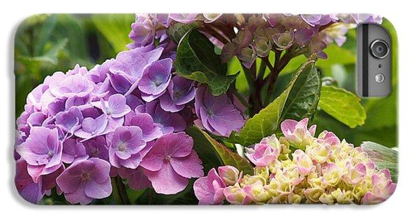 Colorful Hydrangea Blossoms IPhone 6s Plus Case by Rona Black