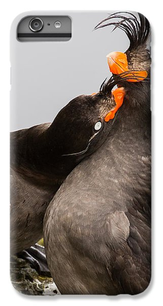 Crested Auklets IPhone 6s Plus Case by Sunil Gopalan