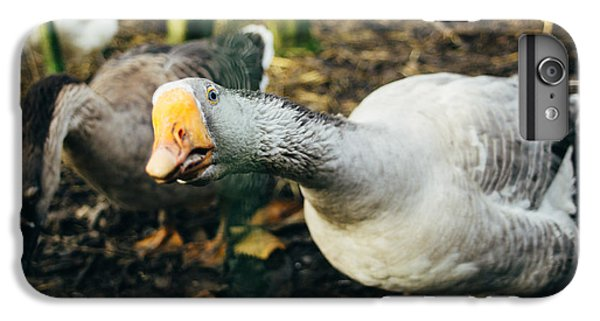 Curious Grey Goose IPhone 6s Plus Case by Pati Photography