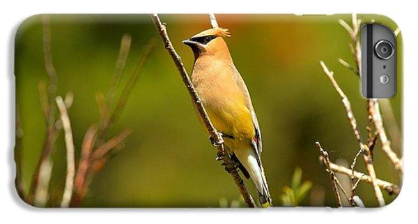 Fishercap Cedar Waxwing IPhone 6s Plus Case by Adam Jewell