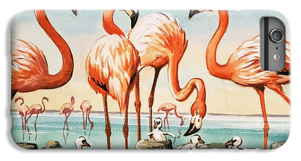 Flamingoes IPhone 6s Plus Case by English School