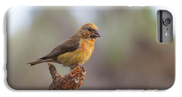 Juvenile Male Red Crossbill IPhone 6s Plus Case by Doug Lloyd