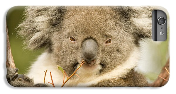 Koala Snack IPhone 6s Plus Case by Mike  Dawson