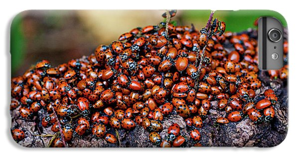 Ladybugs On Branch IPhone 6s Plus Case by Garry Gay