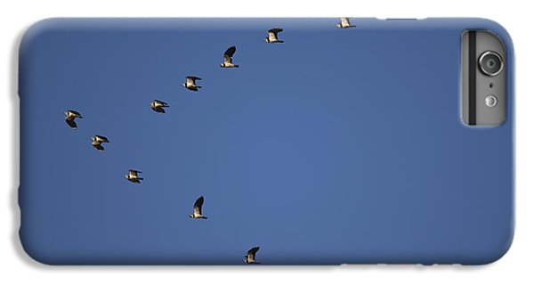 Lapwing Flock IPhone 6s Plus Case by Per-Olov Eriksson