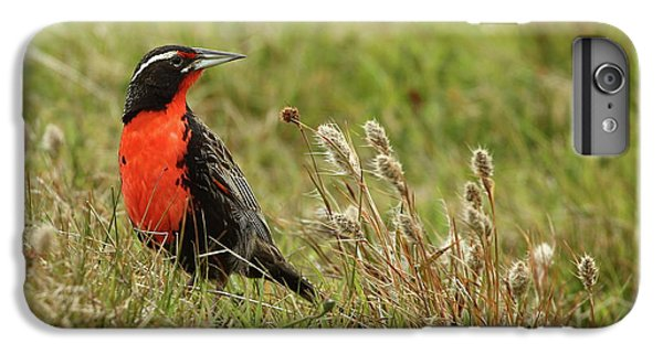 Long-tailed Meadowlark IPhone 6s Plus Case by Bruce J Robinson
