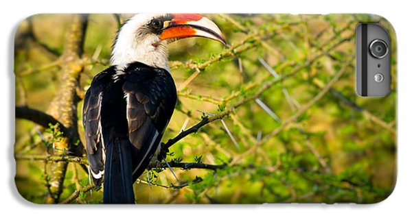 Male Von Der Decken's Hornbill IPhone 6s Plus Case by Adam Romanowicz