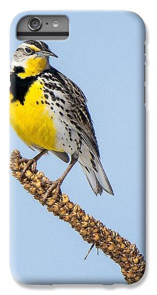 Meadowlark On Mullein Stalk IPhone 6s Plus Case by Stephen Johnson