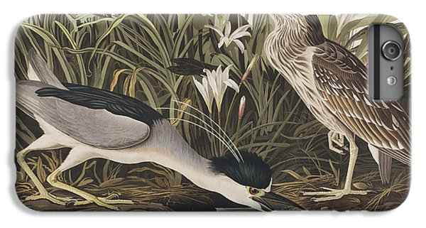Night Heron Or Qua Bird IPhone 6s Plus Case by John James Audubon