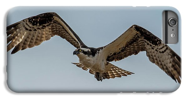 Osprey Flying IPhone 6s Plus Case by Paul Freidlund