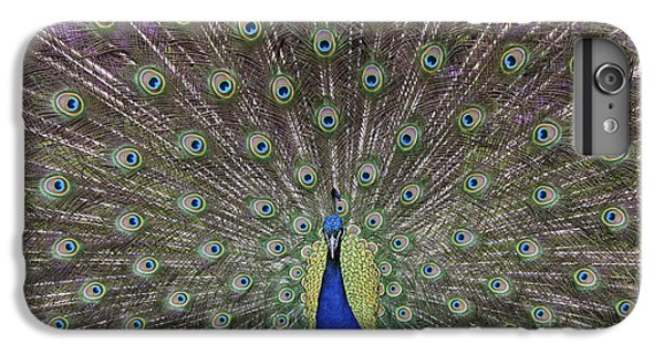 Peacock Display IPhone 6s Plus Case by Tim Gainey