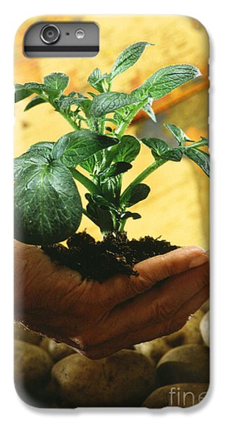 Potato Plant IPhone 6s Plus Case by Science Source