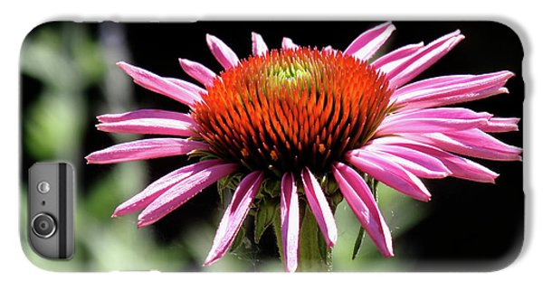 Pretty Pink Coneflower IPhone 6s Plus Case by Rona Black