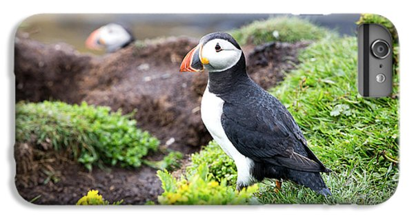 Puffin  IPhone 6s Plus Case by Jane Rix