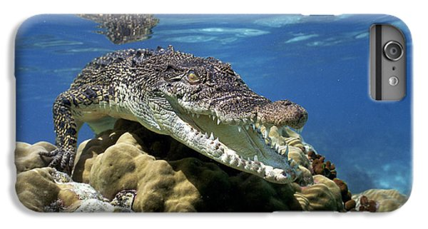 Saltwater Crocodile Smile IPhone 6s Plus Case by Mike Parry
