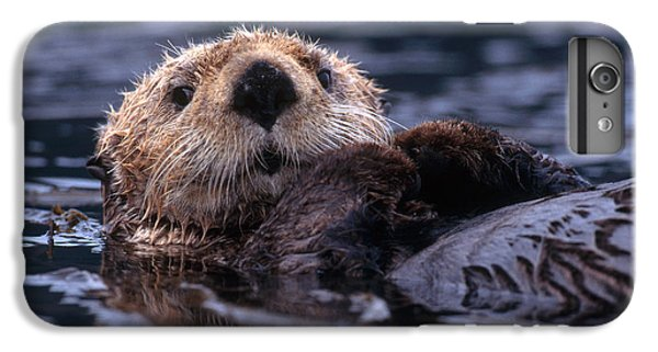 Sea Otter IPhone 6s Plus Case by Yva Momatiuk and John Eastcott and Photo Researchers