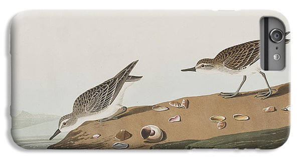 Semipalmated Sandpiper IPhone 6s Plus Case by John James Audubon
