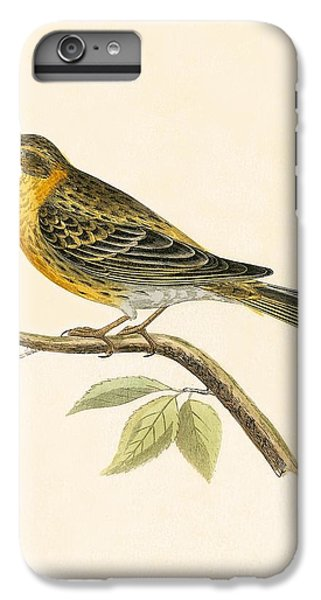 Serin Finch IPhone 6s Plus Case by English School