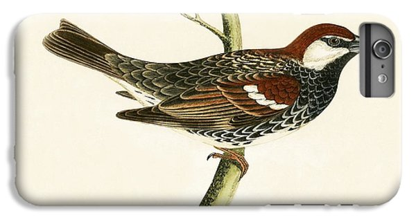 Spanish Sparrow IPhone 6s Plus Case by English School
