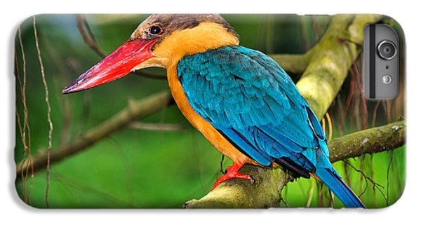 Stork-billed Kingfisher IPhone 6s Plus Case by Louise Heusinkveld