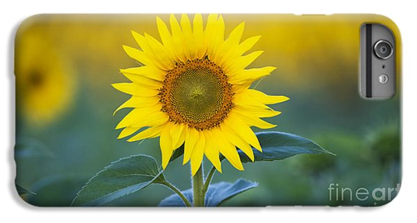 Sunflower IPhone 6s Plus Case by Tim Gainey