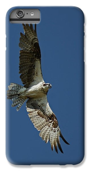 The Osprey IPhone 6s Plus Case by Ernie Echols