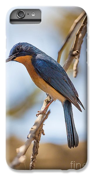 Tickells Blue Flycatcher, India IPhone 6s Plus Case by B. G. Thomson