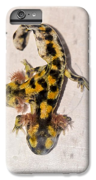 Two-headed Near Eastern Fire Salamande IPhone 6s Plus Case by Shay Levy