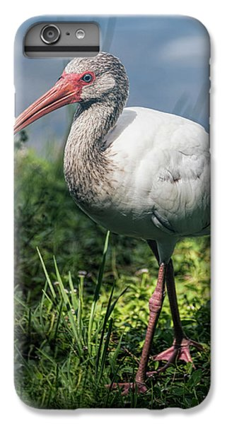 Walk On The Wild Side  IPhone 6s Plus Case by Saija Lehtonen