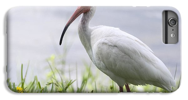 White Ibis  IPhone 6s Plus Case by Saija  Lehtonen