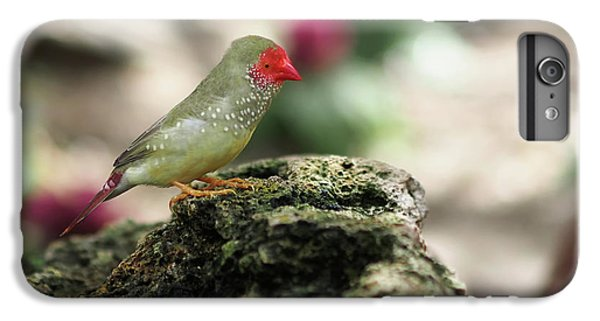 Young Star Finch IPhone 6s Plus Case by Rona Black