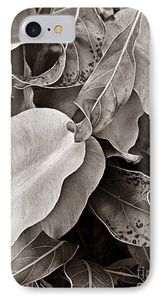 Primrose Seed Pods IPhone Case by Chris Berry