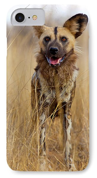 Africa, Namibia Wild Dog Close-up IPhone Case by Jaynes Gallery
