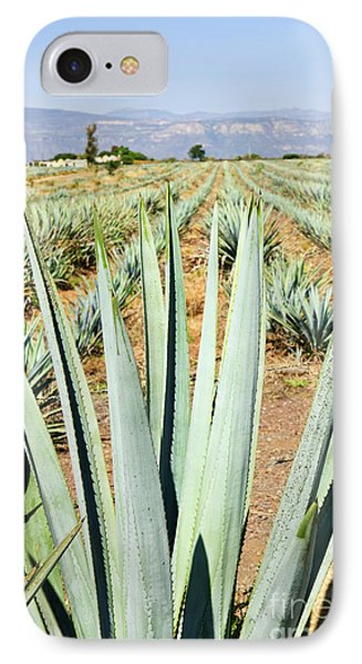 Agave Cactus Field In Mexico Phone Case by Elena Elisseeva