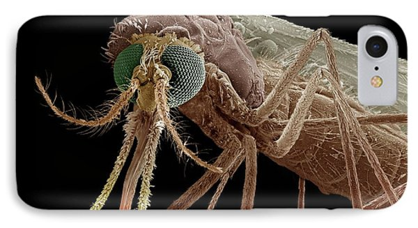 Anopheles Mosquito IPhone Case by Clouds Hill Imaging Ltd