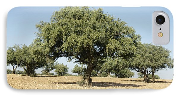 Argan Trees Argania Spinosa IPhone Case by Johnny Greig