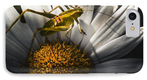Australian Grasshopper On Flowers. Spring Concept IPhone Case by Jorgo Photography - Wall Art Gallery