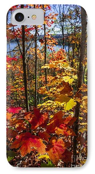 Autumn Splendor IPhone Case by Elena Elisseeva