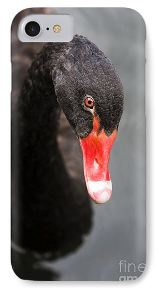 Black Swan IPhone Case by Jorgo Photography - Wall Art Gallery