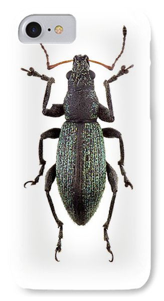 Broad-nosed Weevil IPhone Case by F. Martinez Clavel