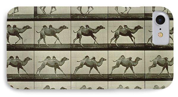 Camel IPhone Case by Eadweard Muybridge