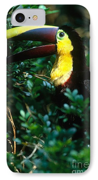 Chestnut-mandibled Toucan IPhone Case by Art Wolfe