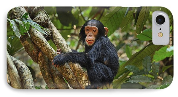 Chimpanzee Baby On Liana Gombe Stream IPhone Case by Thomas Marent